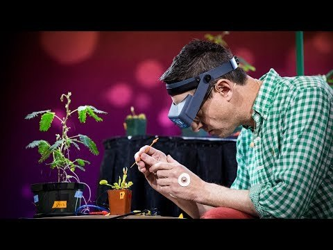 Electrical experiments with plants that count and communicate | Greg Gage