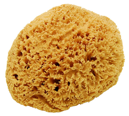 large-natural-sea-sponge-45.gif