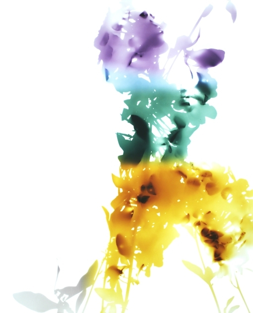 James Welling, Flower 3, 2006