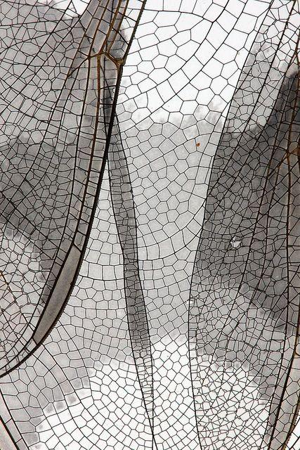 Dragonfly, by Cheryl Rose.