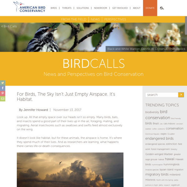 For Birds, the Sky Isn't Just Empty Airspace. It's Habitat.