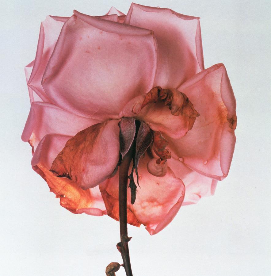 Irving-Penn-Flower-11.jpg