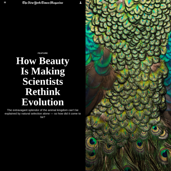 How Beauty Is Making Scientists Rethink Evolution