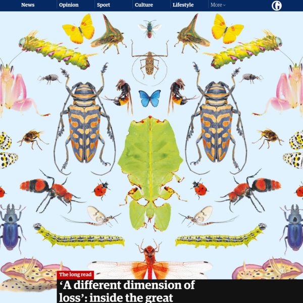 'A different dimension of loss': inside the great insect die-off