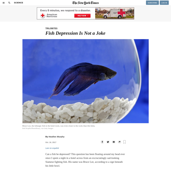 Fish Depression Is Not a Joke