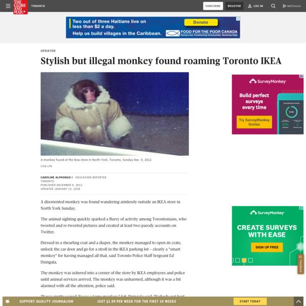 Stylish but illegal monkey found roaming Toronto IKEA
