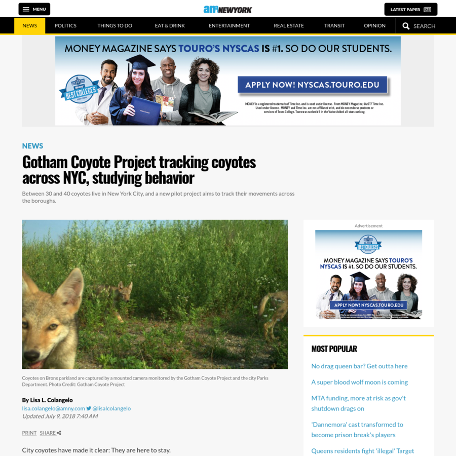City coyotes have made it clear: They are here to stay. In recent years, the shy and wily critters have been spotted all over the boroughs, including in Central Park, Battery Park City, near LaGuardia Airport and golf courses in the Bronx.