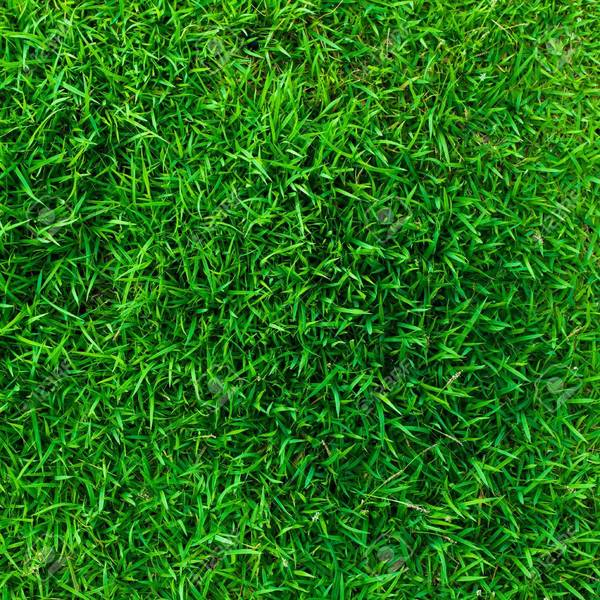 88716562-green-artificial-grass-abstract-wall-texture-background-used-for-flooring-soccer-field-or-a-playgrou.jpg