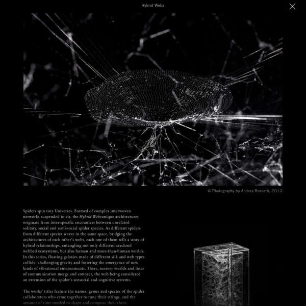 """""""Forget about spider man and his meek two-dimensional webs! Even though spider webs have been around for at least 140 million years, we have never managed to preserve, measure and display their webs in a three dimensional form."""