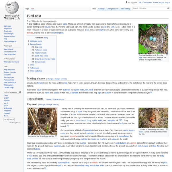 Bird nest - Simple English Wikipedia, the free encyclopedia