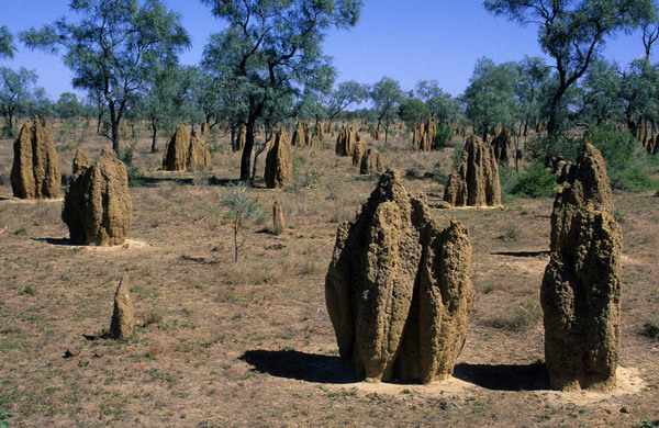 termite-mounds-near-derby-kimberley-wa.jpg