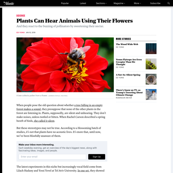 Plants Can Hear Animals Using Their Flowers