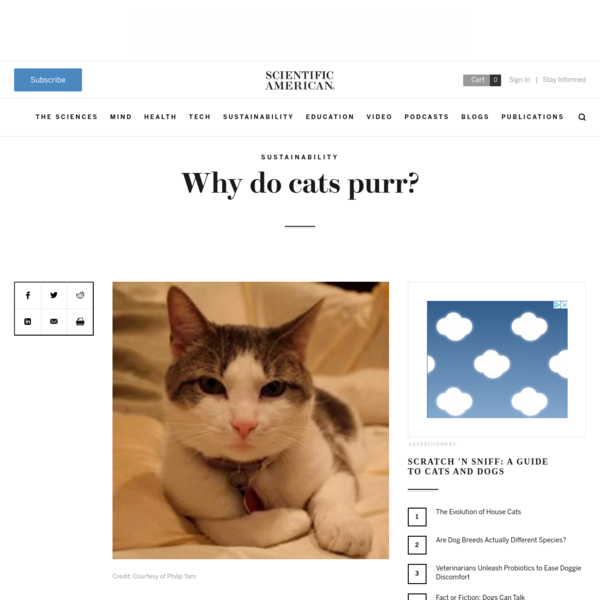 Why do cats purr?