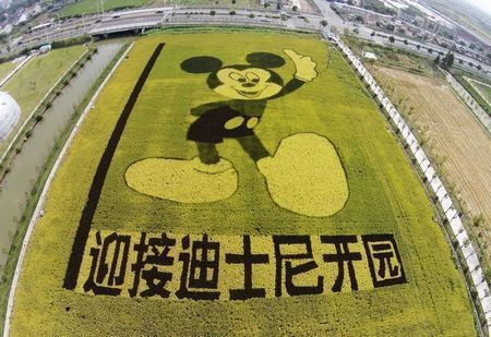 shanghai-disney-resort-rice-plants.jpg