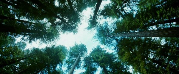 tree-2-final-1050x438.jpg