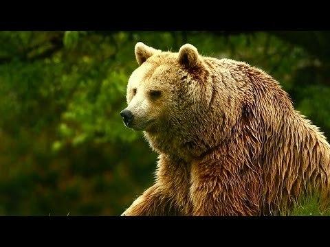Unedited Footage of a Bear | Infomercials | Adult Swim