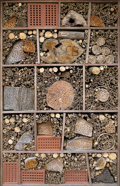 durrell-wildlife-conservation-trust-insect-hotel-34.jpg