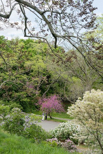 Bem-Langford_Gardens