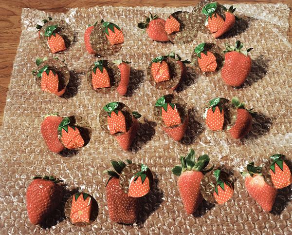 Lucas Blalock, Strawberries (fresh forever), 2014
