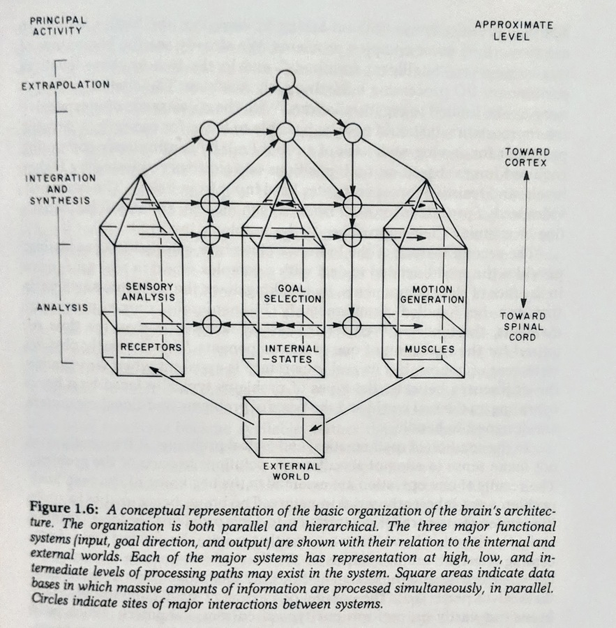 basic_org.jpg