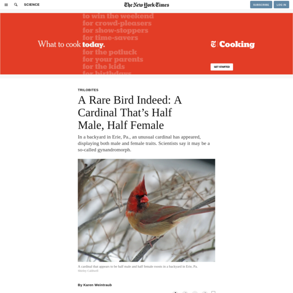 A Rare Bird Indeed: A Cardinal That's Half Male, Half Female