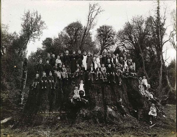 fieldbrook-stump-300dpi_web.jpg