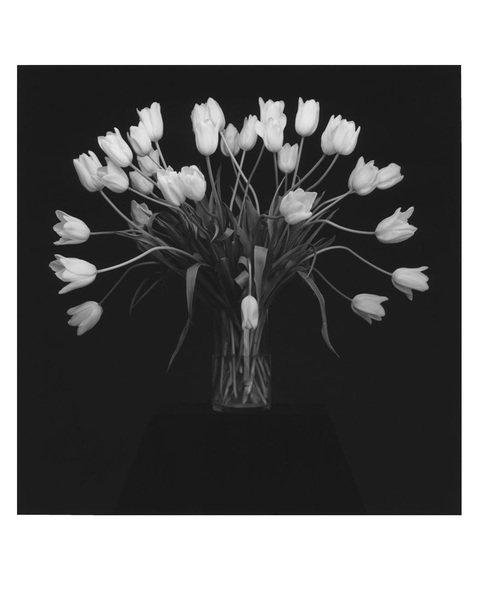 mapplethorpe-tulips.jpg