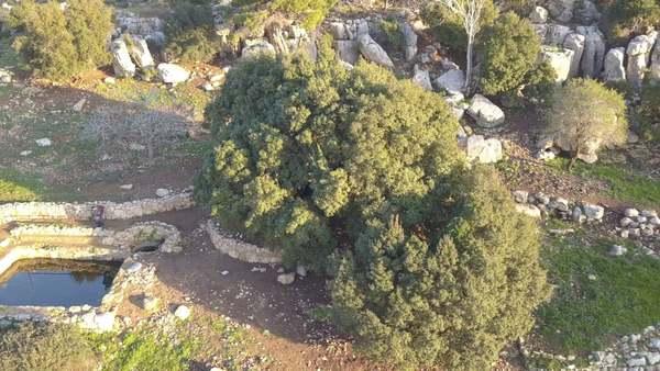 06 oak