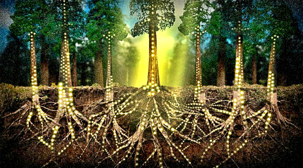 12-astonishing-facts-that-prove-trees-communicate-and-have-feelings.jpg