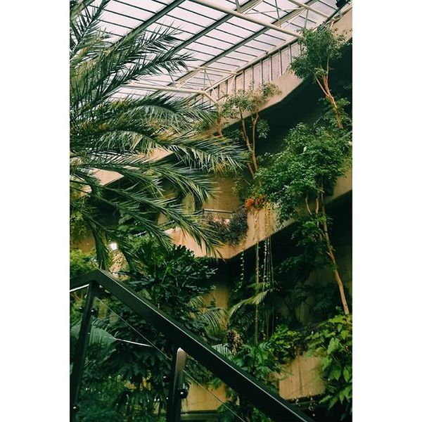 """1,295 Likes, 4 Comments - Joana Polonia (@joanapol) on Instagram: """"Welcome to the jungle 🍃 #brutalism"""""""