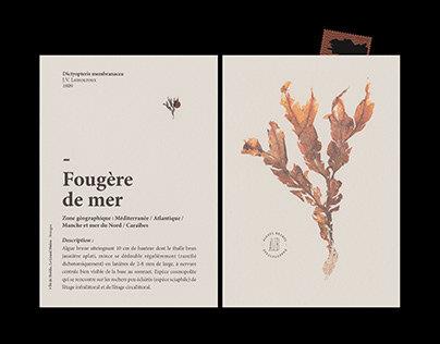 Edition - AVABAR, seaweed herbarium