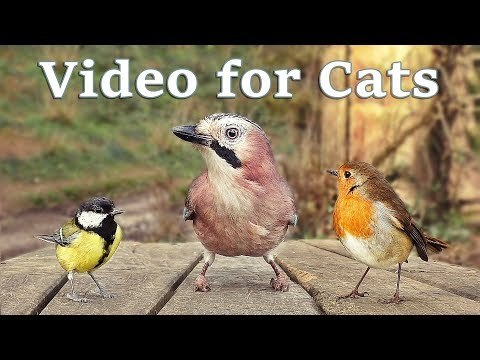 Videos for Cats to Watch - 8 Hour Bird Bonanza Video Produced by Paul Dinning - Wildlife in Cornwall #PaulDinning