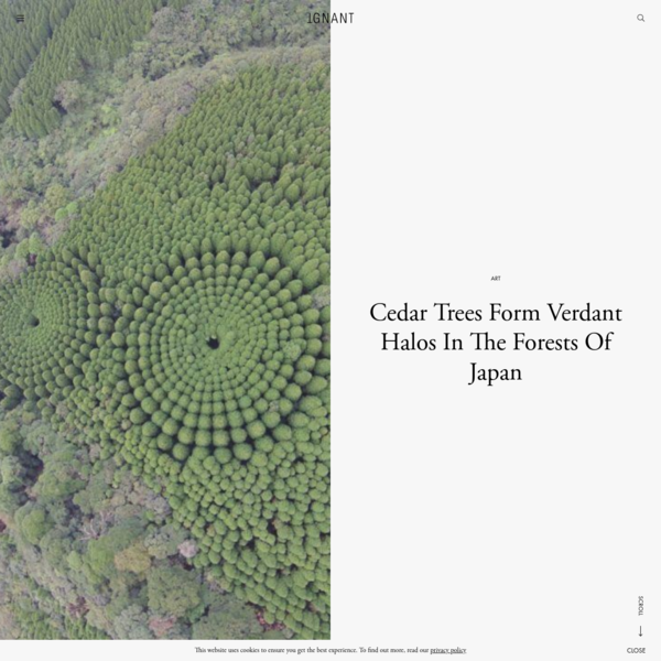 Cedar Trees Form Verdant Halos In The Forests Of Japan - IGNANT