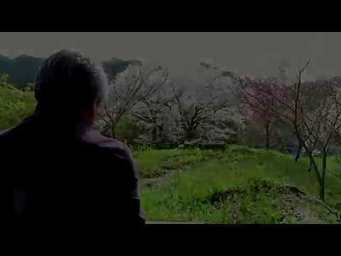 楠母神社跡 桜に捧げる