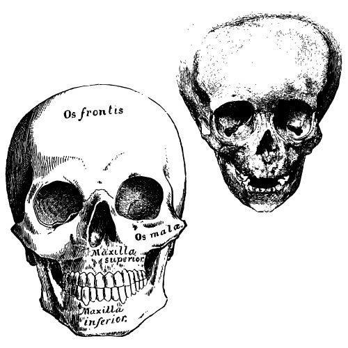 skulls-jonny-doomsday.jpg