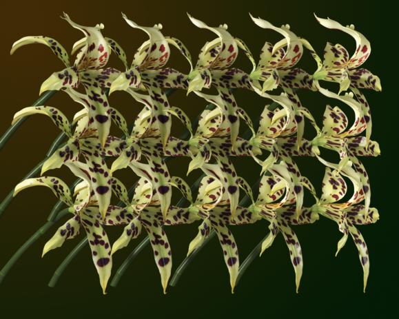 Flower Options 1