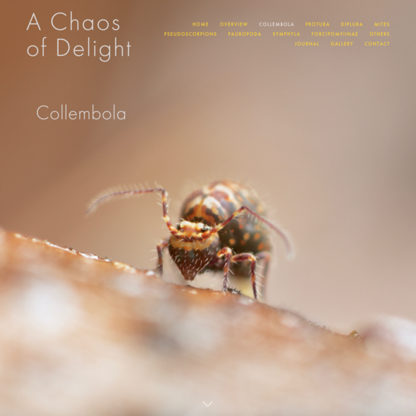 All about Collembola/springtails - A Chaos of Delight