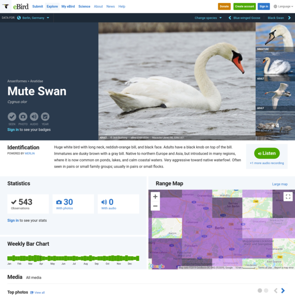 Mute Swan - eBird