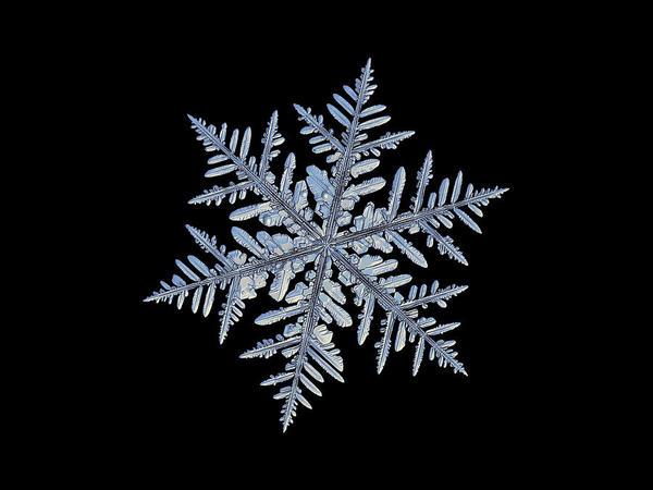real-snowflake-silverware-black-alexey-kljatov.jpg