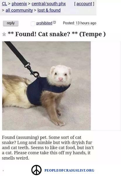 Craigslist-Cat-Snake.jpg
