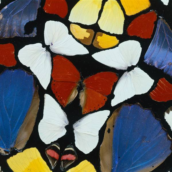 I made a series of butterfly grid works based loosely on famous church windows and this was the first one, it was in my big ...
