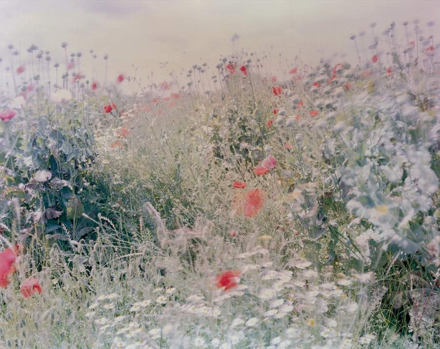 Ori Gersht, Wildflowers from Flowers, 2004