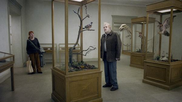 A-Pigeon-Sat-on-a-Branch-Reflecting-on-Existence-3.jpg
