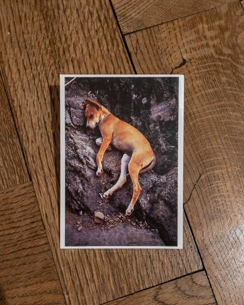Gabriel Orozco - Sleeping Dog