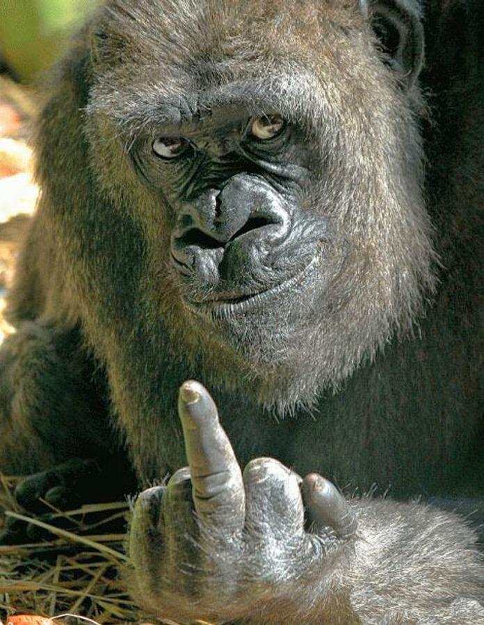 gorilla-finger.jpg