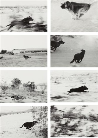 john-divola-selected-images-from-dogs-chasing-my-car-in-the-desert.jpg