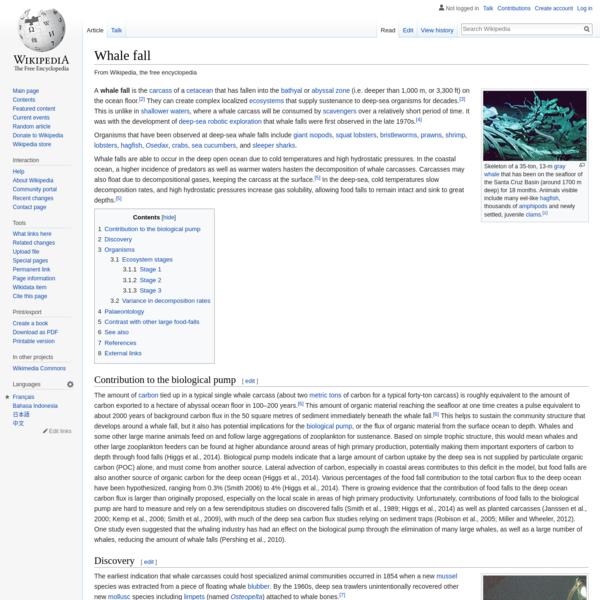 Whale fall - Wikipedia