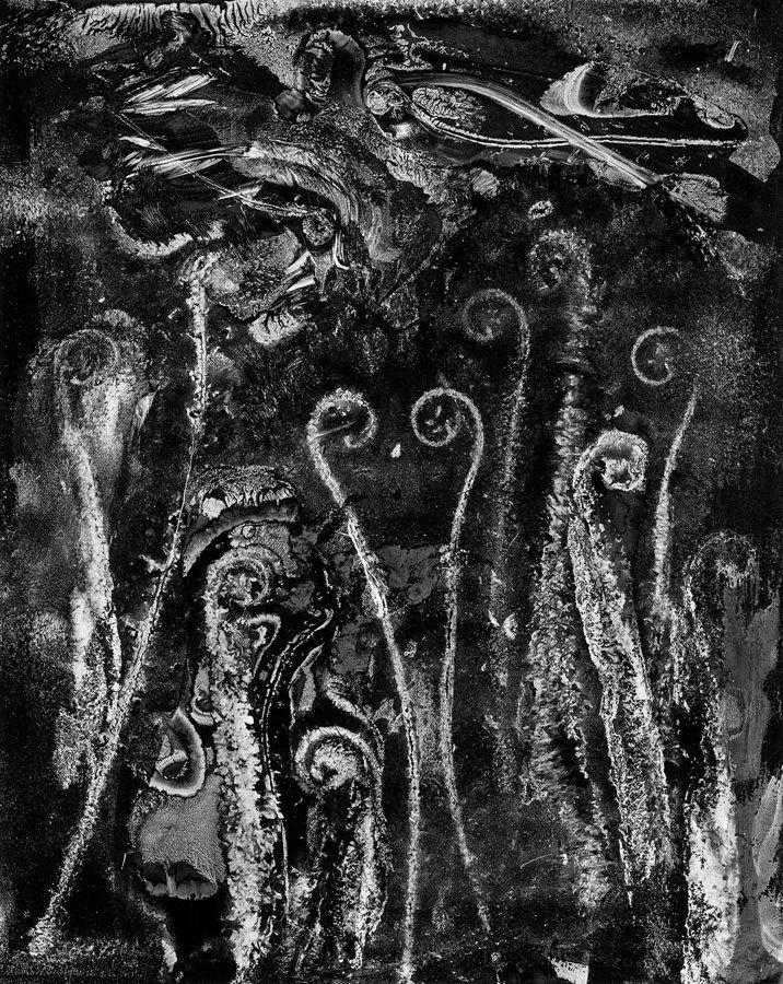 Abelardo Morell, Fern 9, Cliché-verre, 2009