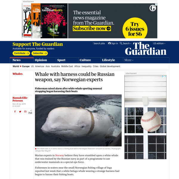 Whale with harness could be Russian weapon, say Norwegian experts
