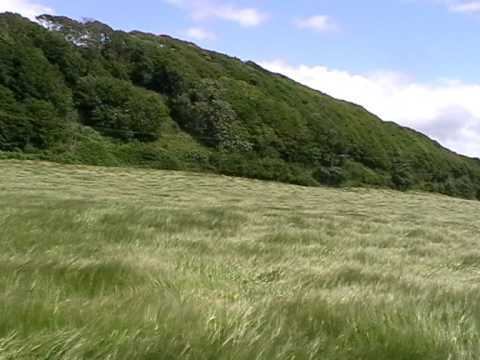 Grass blowing in the wind.